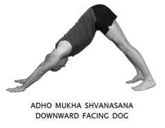 Image Result For Downward Dog Heels
