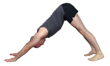 Image Result For Downward Dog Yoga
